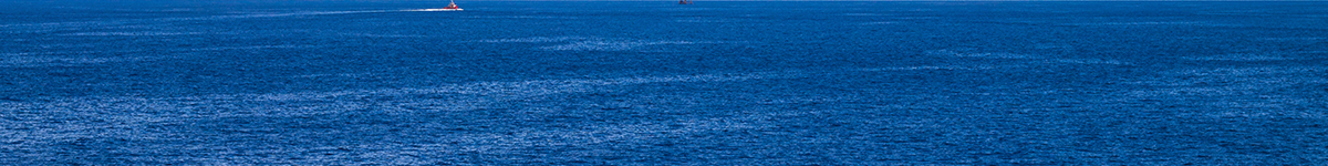 פרויקט לוויתן
